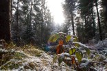 Der erste Schnee im Wald