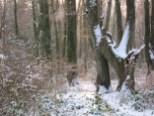Winterliche Bäume