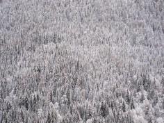 Verschneiter Winterwald in den Bergen