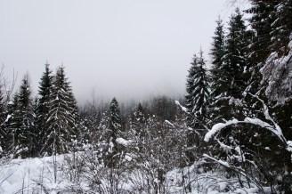 Winterwald mit Schnee und Wolken