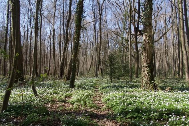 Im Frühling wird es grün im Wald