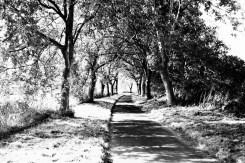 Sonniger Radweg an der Ahrmündung in Sinzig