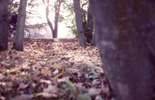 Herbstlicher Durchblick am Rheinufer bei Bad Godesberg
