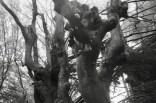 Bäume Kottenforst - Kopfbuche und Baumpilze
