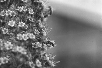 Feine Bienen 3