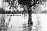 Ein Baum im Rhein mit Ruderboot