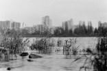 Mit dem Wephota Pan 100 am winterlichen Rheinufer