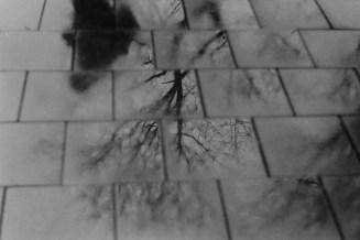 Spiegelungen im verregneten Pflaster. Mit dem Wephota Pan 100 im winterlichen Bonn