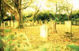 Jüdischer Friedhof (Schwarzrheindorf), mit Farbkorrektur