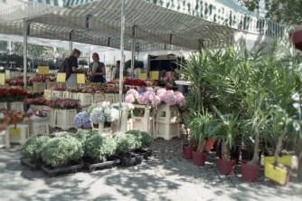 Blumenladen auf dem Münsterplatz