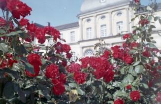 Rote Rosen im Botanischen Garten