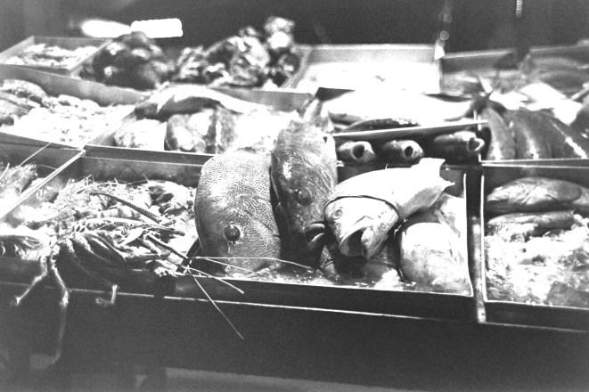 Betroffen guckende Fische auf Eis