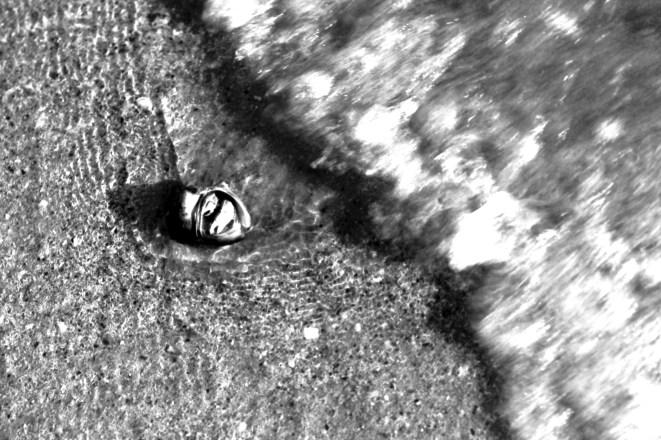 Kleine Krabbe kurz vor der wegspülenden Welle