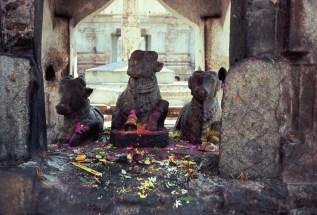 Nandi im Virupaksha-Temple Hampi