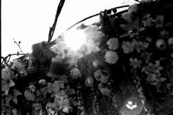 Weißer Blumenschmuck am Meer, im Gegenlicht