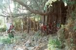 Wishing tree - Wunschbaum in Hampi