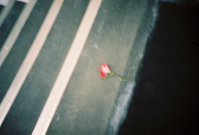 Verlorene Rose auf einer Treppe in der Metro