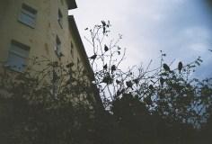 Trashig mit der LOMO in Berlin - 10