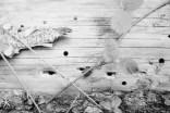 Kodak Tri-X 400 - Fast wie Noten ziehen sich die kreisrunden Löcher über das tote Holz