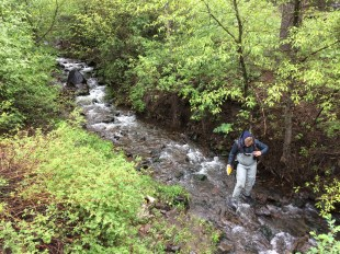 Observing spawning trout in tributaries of the North Fork Shoshone
