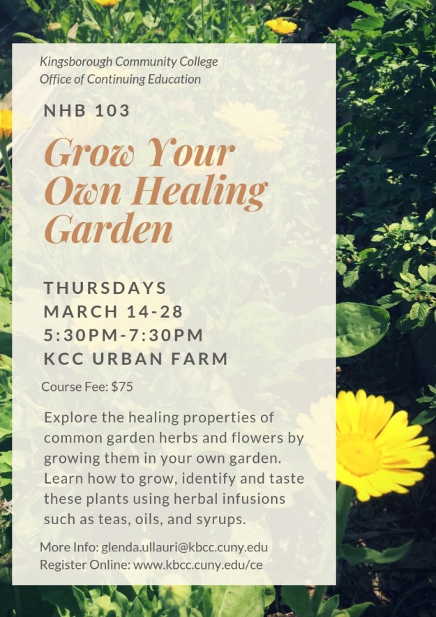 KCC Urban Farm Archives - Continuing Education and Workforce