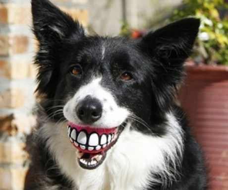 small_grinning teeth dog toy2