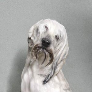 wet-dog-09-685x685