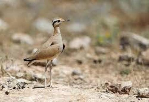 Dürbünler Hazır mı? : Türkiyedeki En Güzel Kuş Gözlem Rotaları