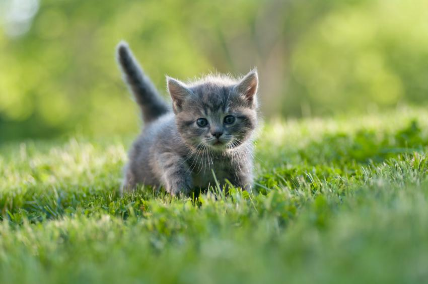 Image result for kitten running