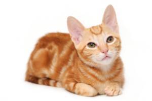 orange tabby cats lovetoknow