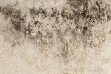 Image Result For How To Get Rid Of Mold And Mildew In Carpet