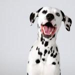 Disney Puppy Names Lovetoknow