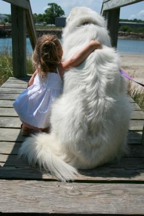 Image result for little girl and dogs