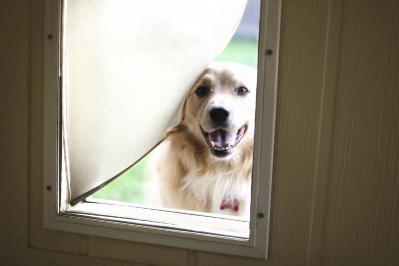 choosing patio dog doors lovetoknow