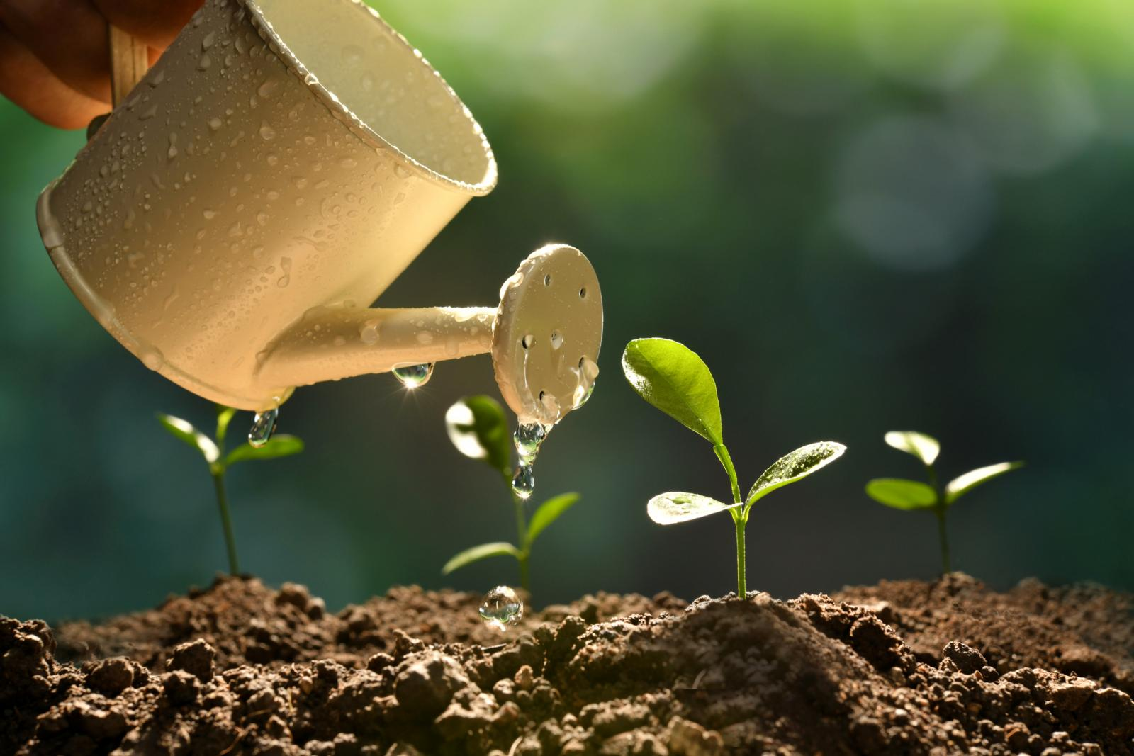 4 Plant Growth Factors That Affect All Plants