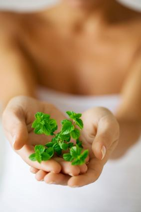 Advantages And Disadvantages Of Herbal Medicine