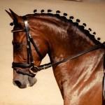 Elegant Horse Names Lovetoknow