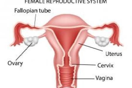 interior internal os of cervix » Full HD MAPS Locations - Another ...
