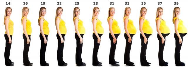 20 Week Ultrasound Uterus