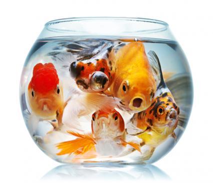 Types Of Goldfish LoveToKnow