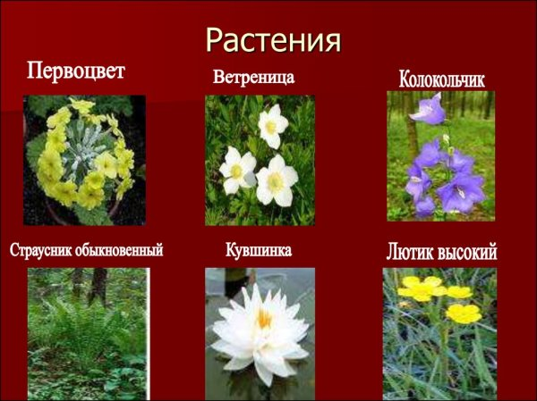 Растения Красной книги - презентация онлайн