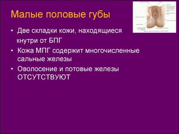 Репродуктивная система женщины. Менструальный цикл ...