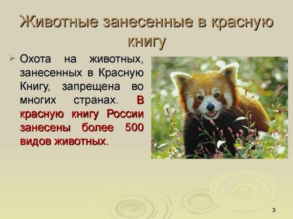 Редкие животные, занесенные в красную книгу - online ...