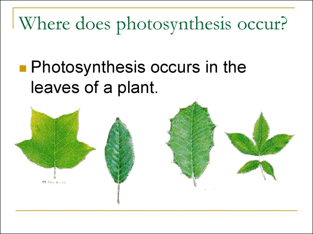 Photosynthesis Grade 3