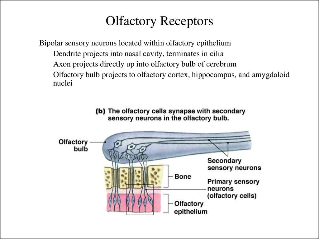 Sensory Systems