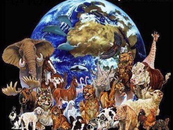 Растения и животные, которые полностью исчезли с нашей ...