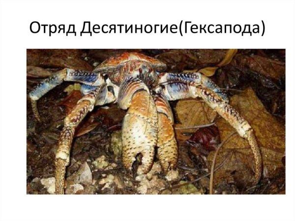 "Онлайн порно из категории ""Фото голых баб"" -  - zd25.ru ..."