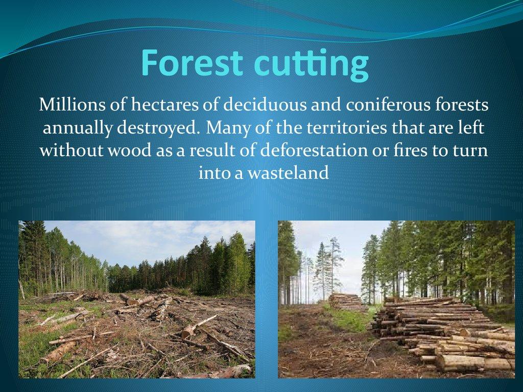Environmental Issues Of The World презентация онлайн