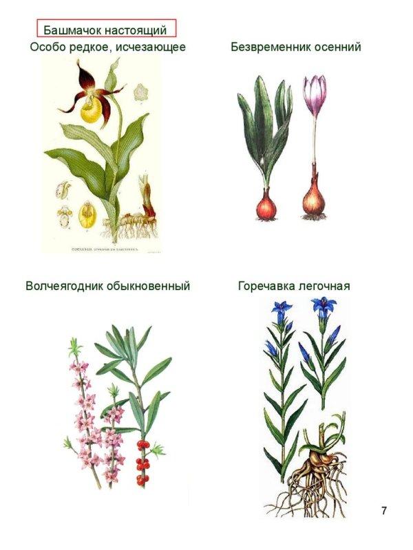 Красная книга. Охраняемые растения и животные ...