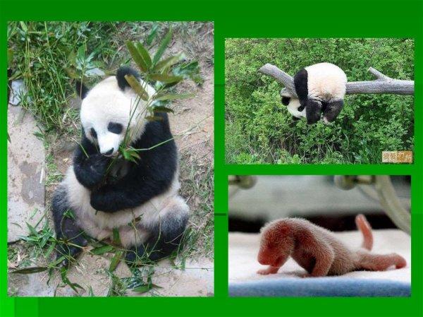 Материк Евразия. Растения и животные - презентация онлайн